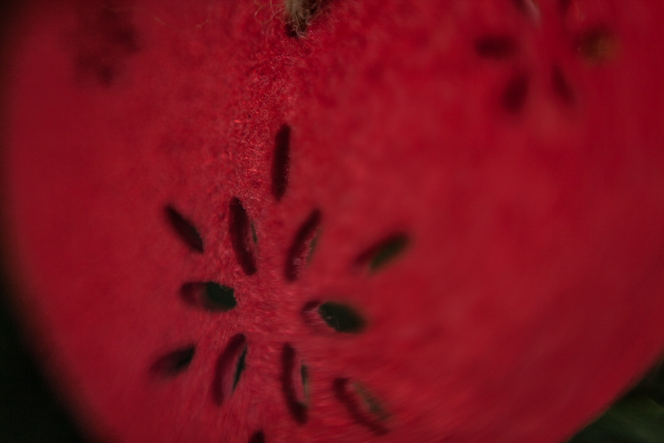 photography tips and tricks reverse lens macro