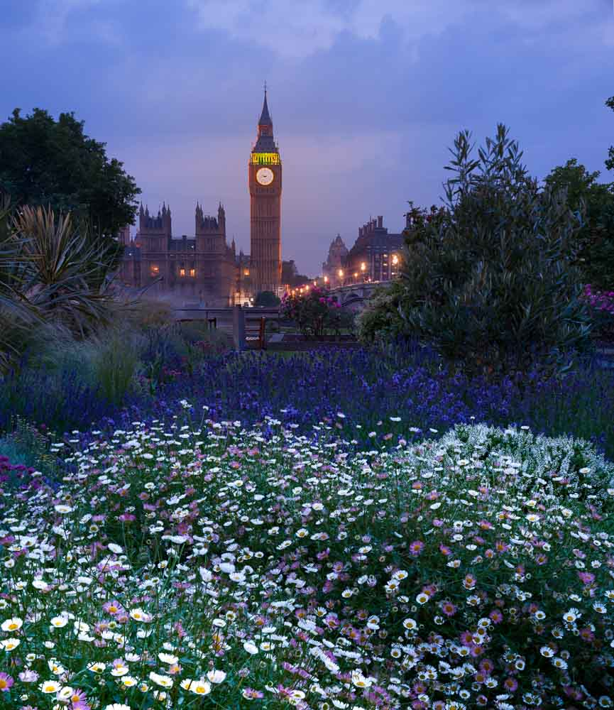 big ben london flowers